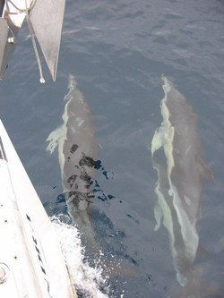 Gascognedauphins2